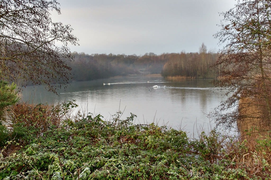 The lake at Southwater Country Park (with swan)