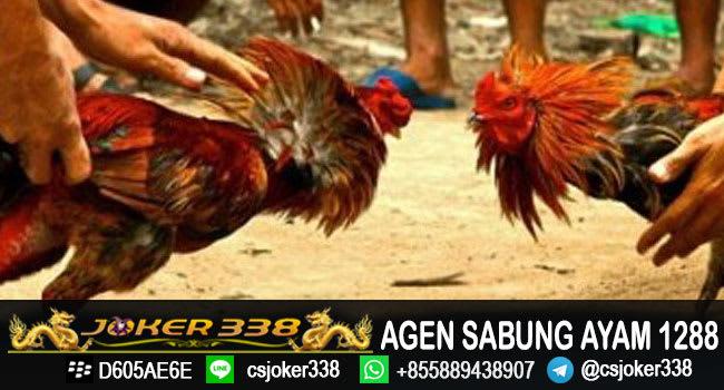 agen-sabung-ayam-s1288