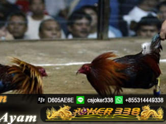 Agen Sabung Ayam Indonesia - DAFTAR JOKER338