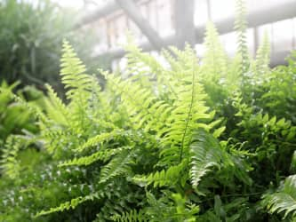 Ferns collectiongs