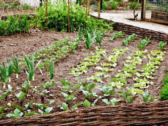 Veg (garden) collectiongs
