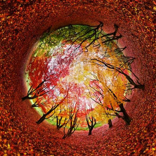 Circular panorama of maple trees.