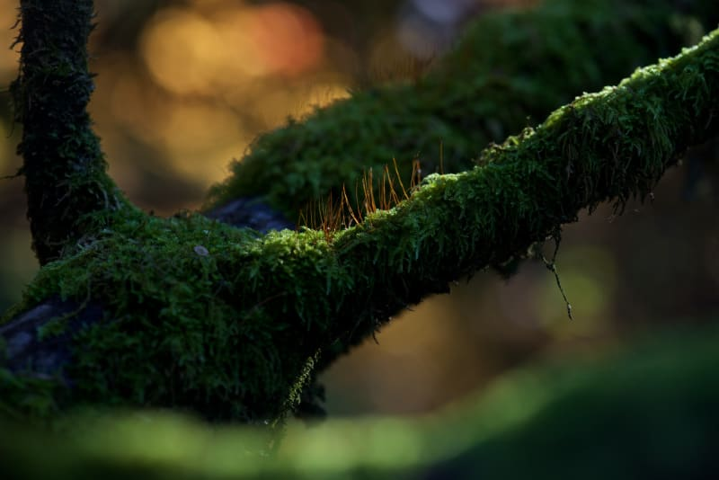 A macro photo of a tree branch with small plants growing out of it.
