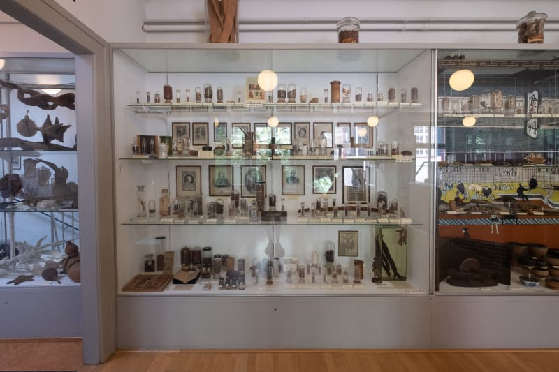 A display case in the Pharmacy museum in Basel. Many small specimens can be seen on each shelf.