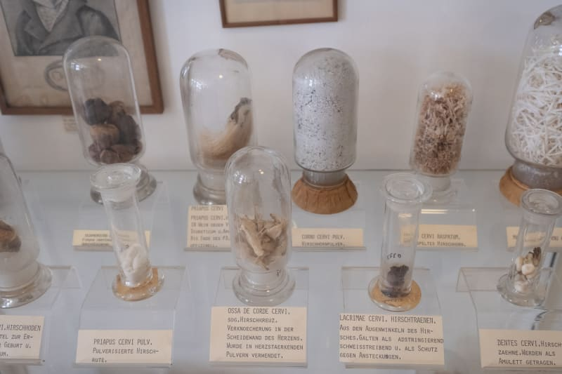 Several specimens in glass jars in a display case at the Pharmacy museum in Basel.
