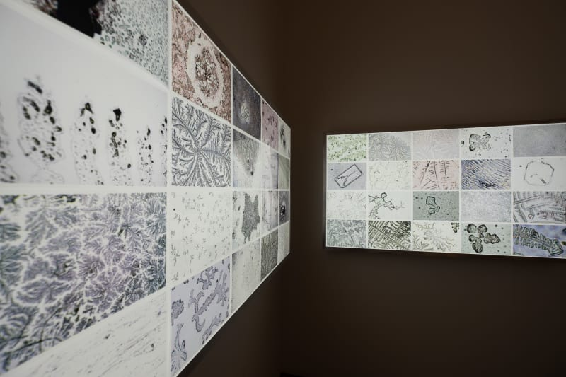 A photo of two light panels displaying photos of microscopic objects.