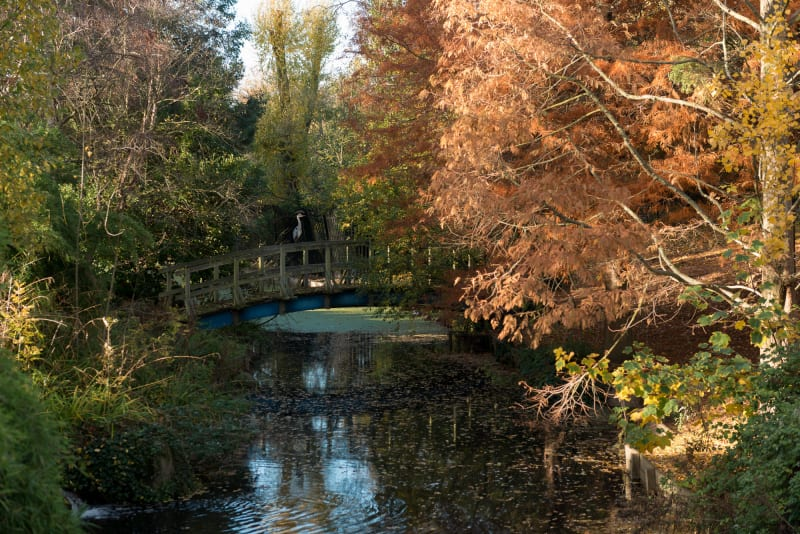 A photo taken from a bridge down a stretch of stream. There's autumnal trees on either side. In the distance another bridge can be seen with a heron sat on it.