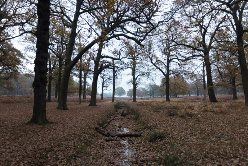 A photo of autumnal woodland. There's a small trench in the floor receding in the distance.