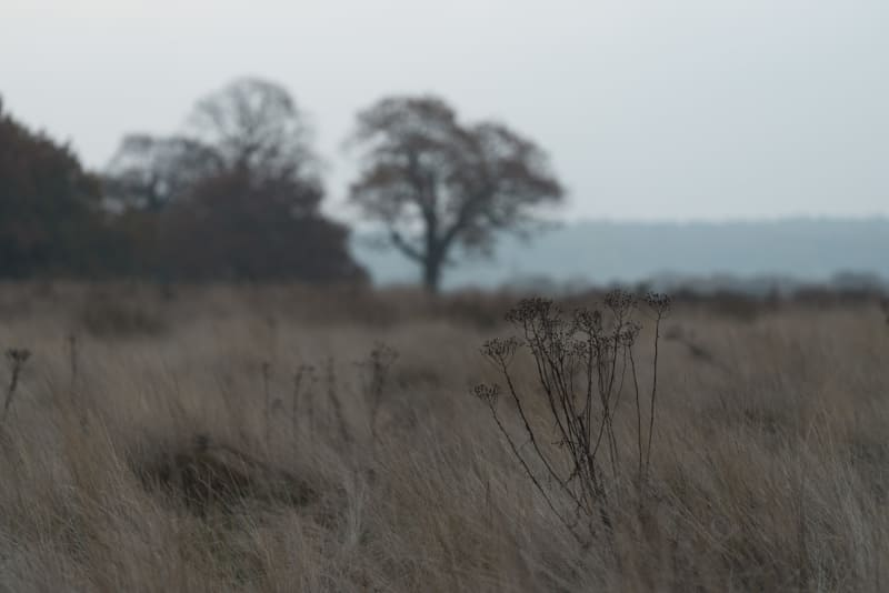 A soft focus image of some branches with dry grass in the background.