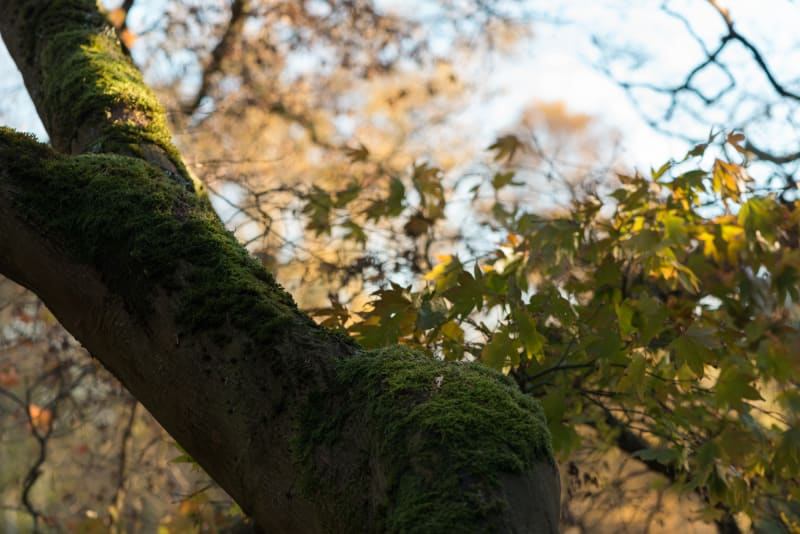 A photo of a tree trunk bending to the side with autumnal leaves behind.