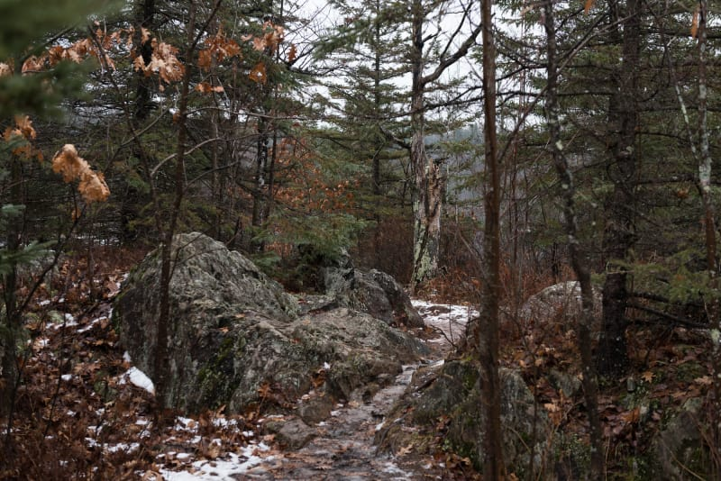 A photo of a rocky and snowy path in a forest.