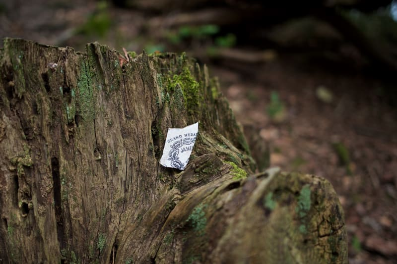 A small piece of china with a blue graphic sits in the stump of an old tree.