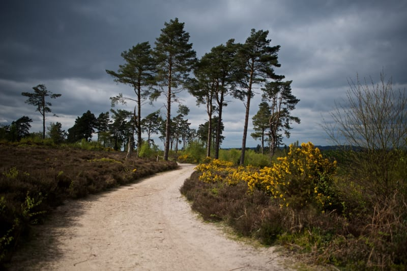 A light sandy path twists away from the camera. There's tall trees in the distance and bright yellow flowers along the edge of the path.