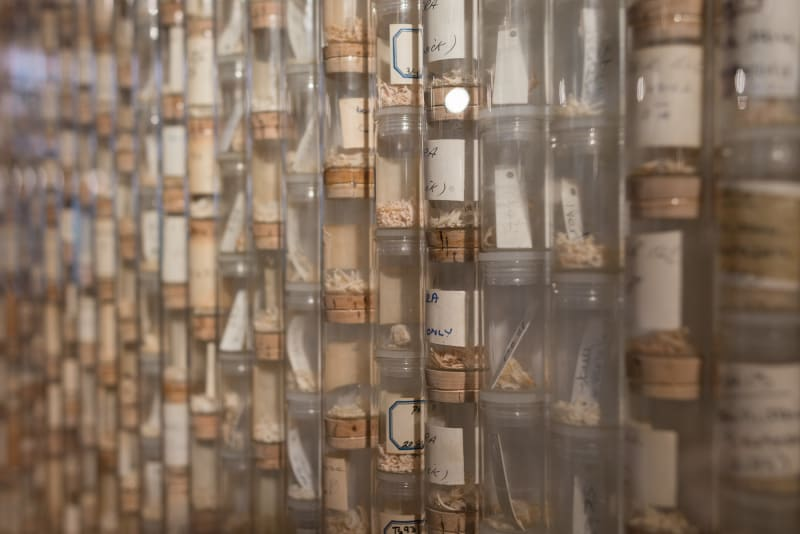 Small cork capped vials of bone fragments stacked end to end, row upon row.