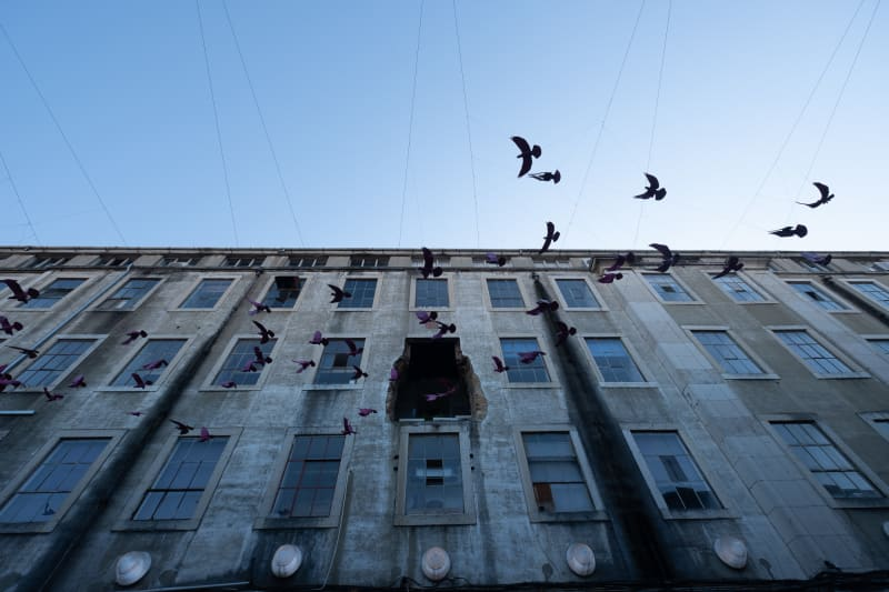 Looking up at the exterior of a 5 story building. In the middle on the fourth floor one window and wall is knocked out. A group of fake birds are suspended in the sky as if in flight past the building.