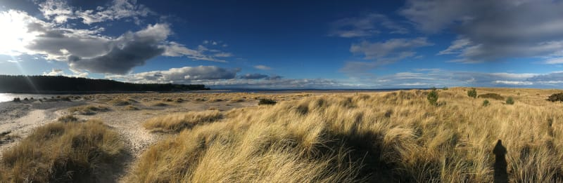 A panorama of a late afternoon beach. There's tall grass across most of the beach, with a deep blue sky with dark clouds overhead.