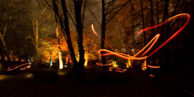 Orange streaks of light in a dark woodland.