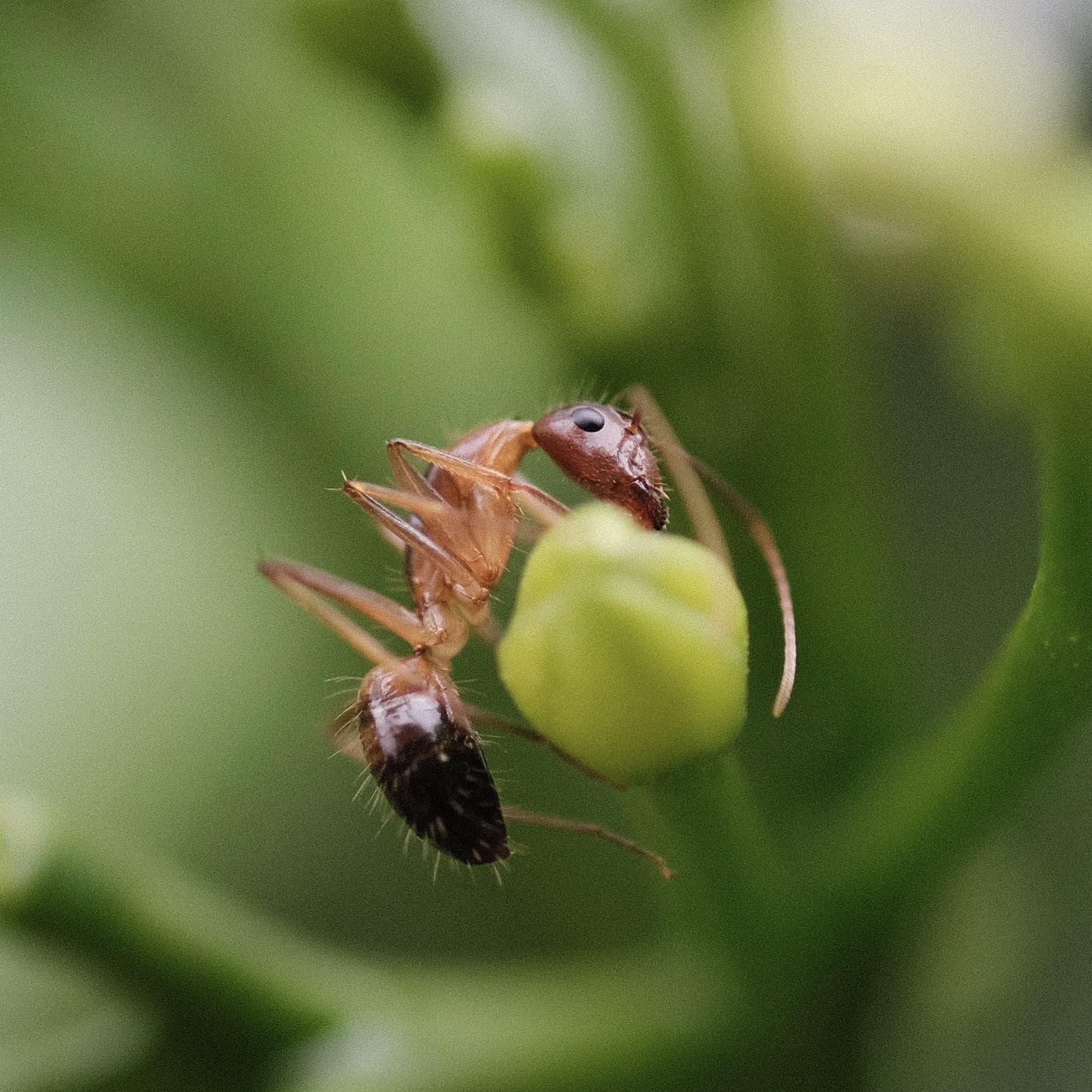 sample insect 60mm f/2.4 macro fuji