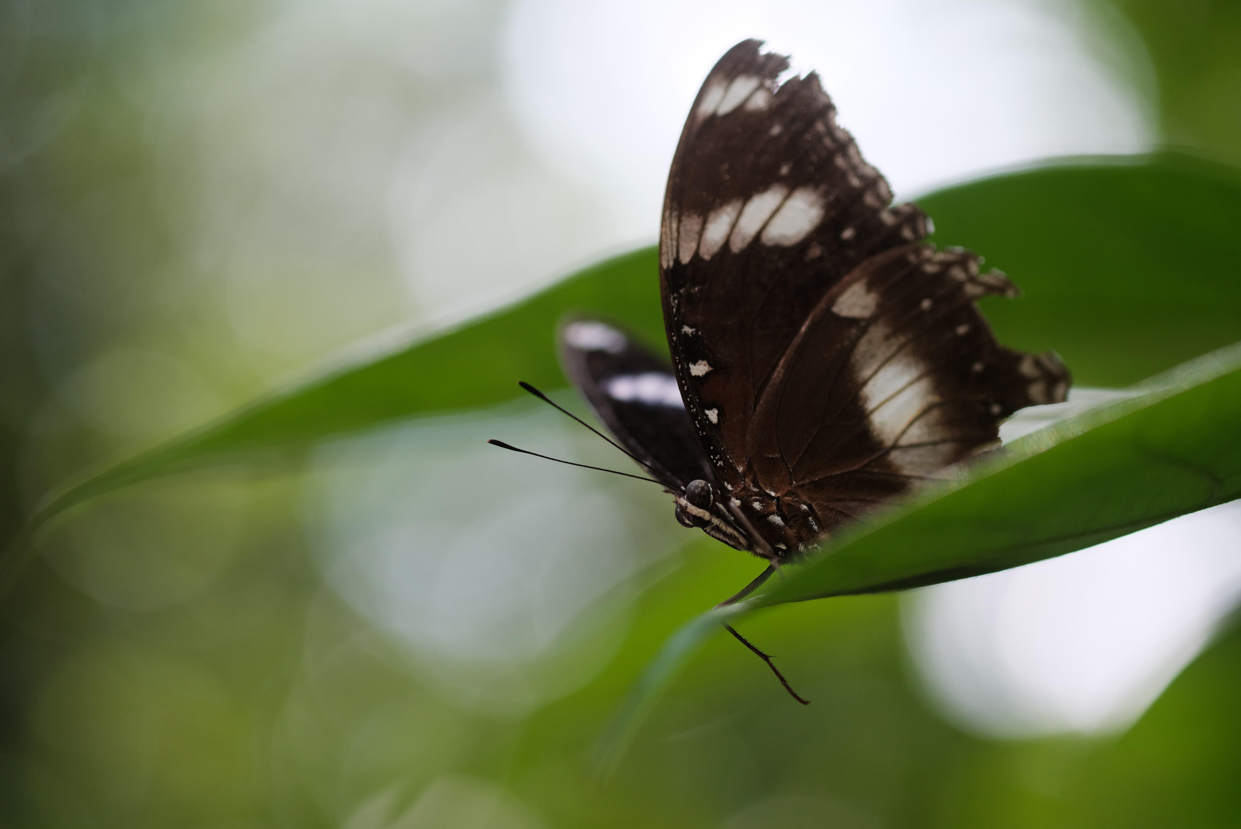 sample butterfly 60mm f/2.4 macro fuji