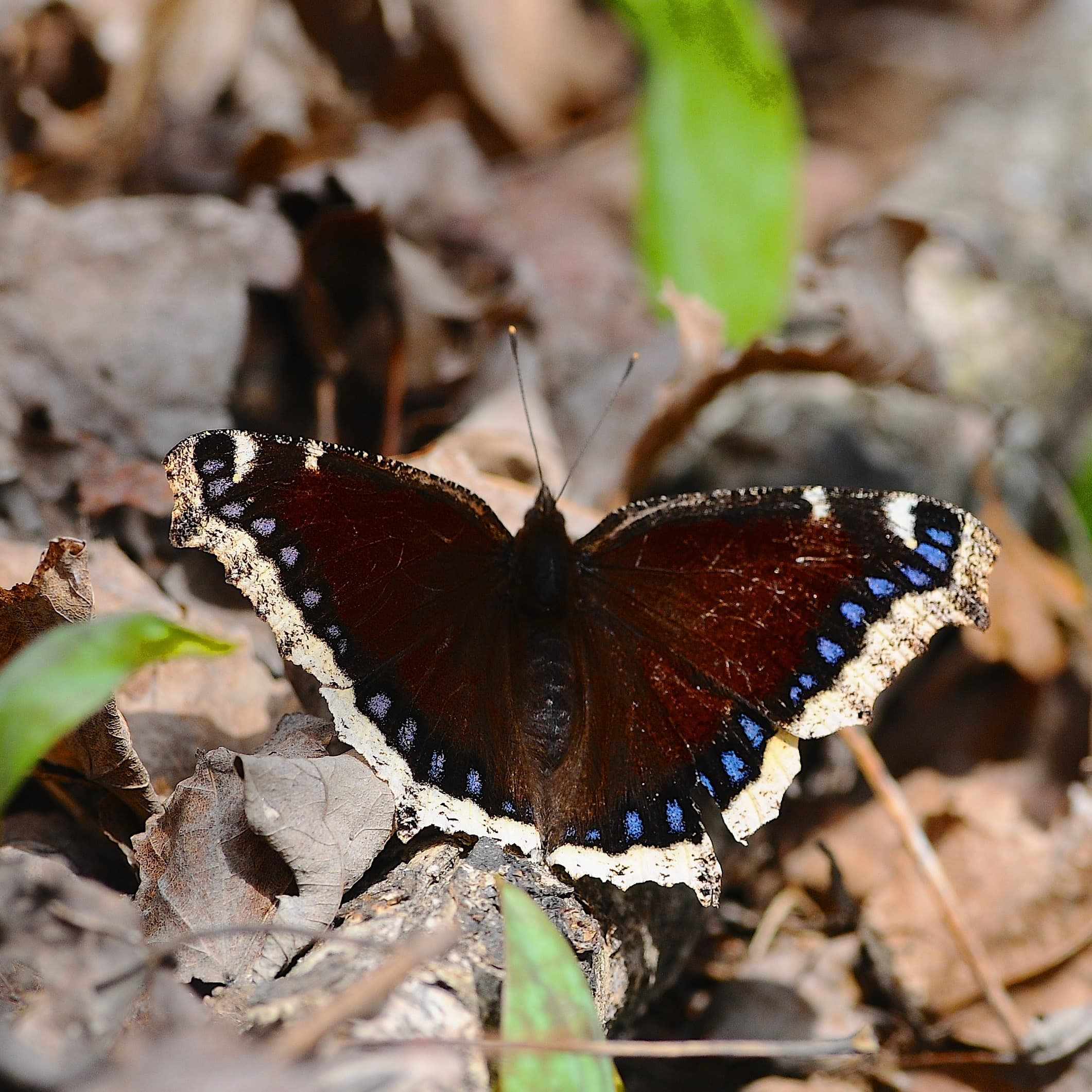 D300 Nikon with butterfly