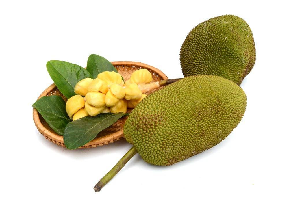 Jackfruit reduces cholesterol