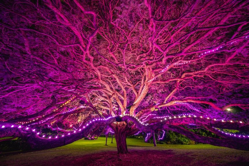 Superorganism at Botanica 2021