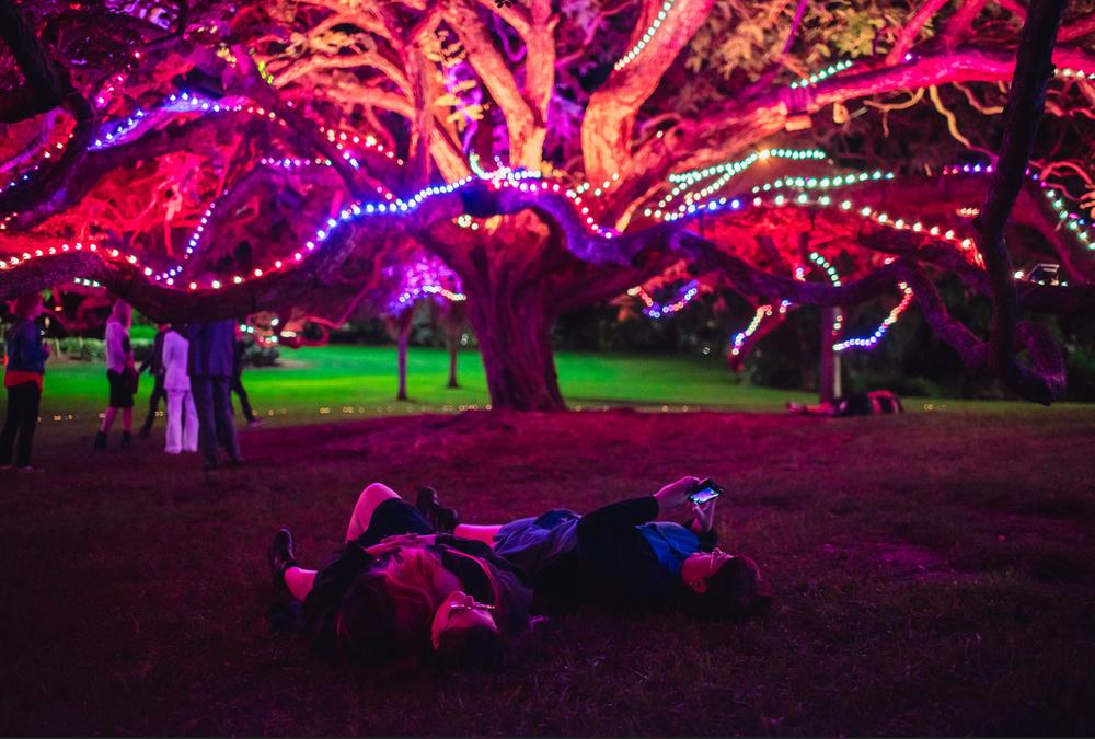 Superorganism: Brisbane City Council image