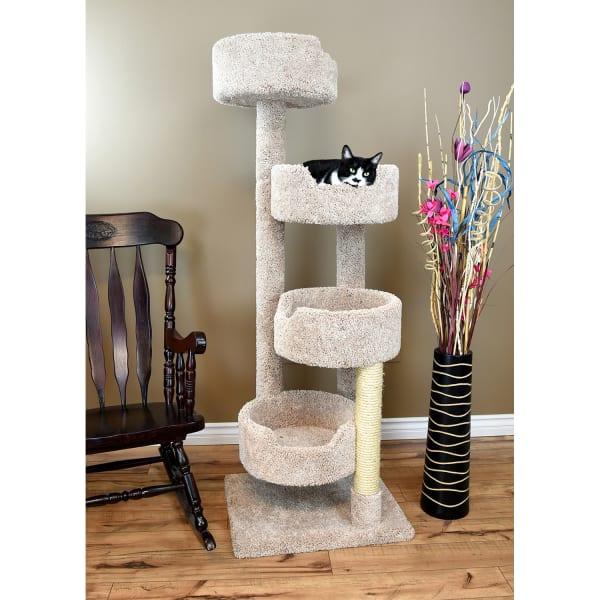 Beige Cat Stairway