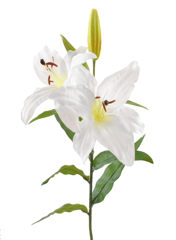 Flower Tiger Lily White (Set of 4)