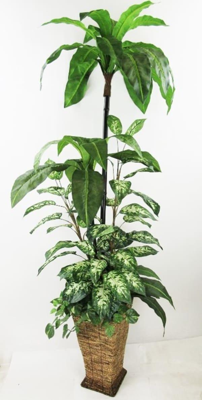 Tropical Foliage Garden Silk Plant