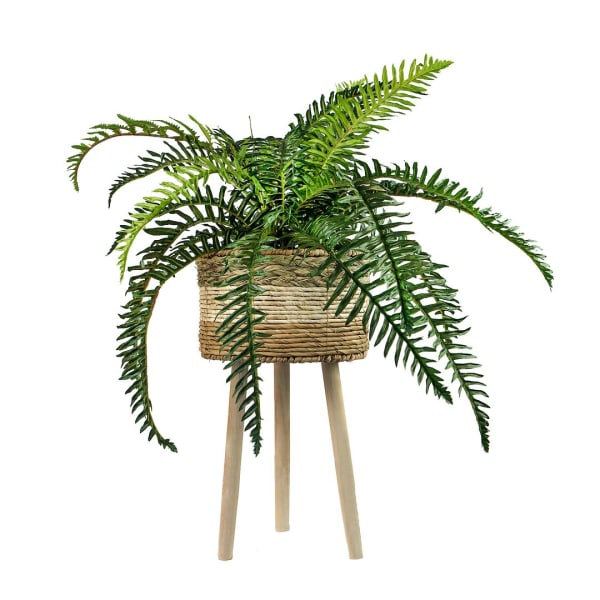 River Fern in Tri-Color Basket Stand