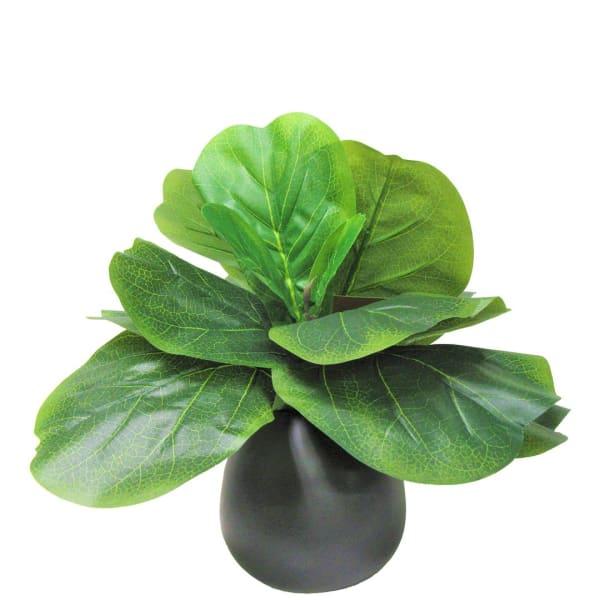 Fig in Round Black Ceramic Vase