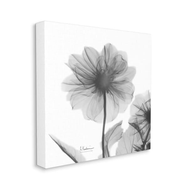 Opaque Dahlia Flower Minimal Black White Silhouette Xxl Stretched Canv Pier 1