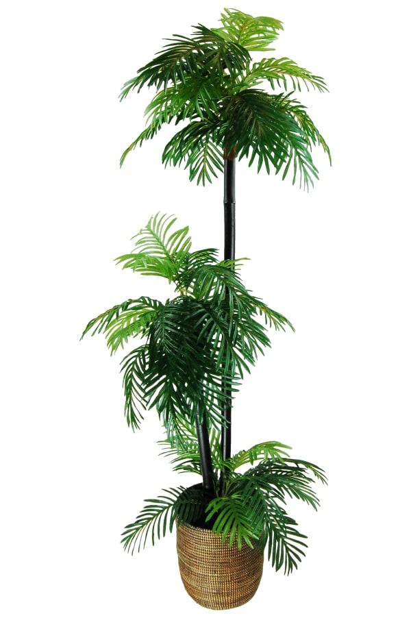 Phoenix Palm Tree in a Basket Silk Plant