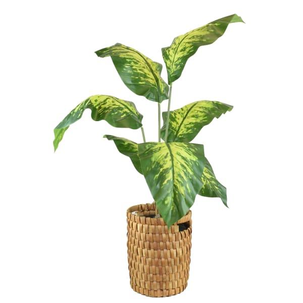Faux Tropical Dieffenbachia Floor Plant with Handle Basket