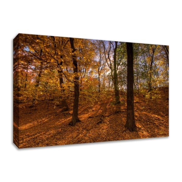 Fine Art Giclee Print on Gallery Wrap Canvas 45 In. x 30 In. Sun Spackled Wood  Multi Color