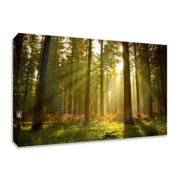 Fine Art Giclee Print on Gallery Wrap Canvas 36 In. x 24 In. Forest at Dusk Multi Color
