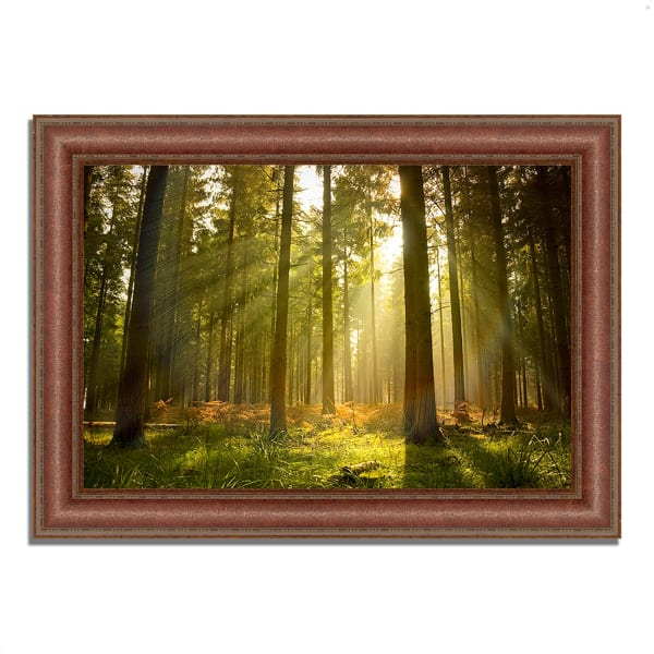 Framed Photograph Print 52 In. x 37 In. Forest at Dusk Multi Color
