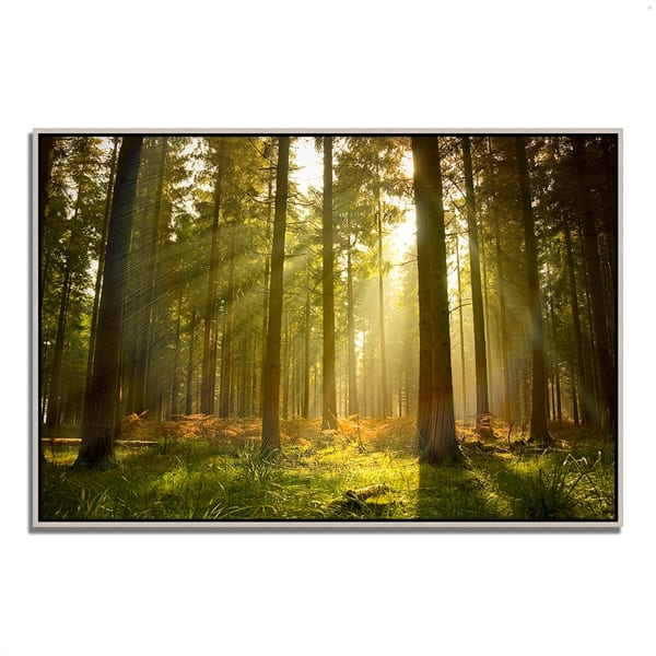 Fine Art Giclee Print on Gallery Wrap Canvas 47 In. x 32 In. Forest at Dusk Multi Color
