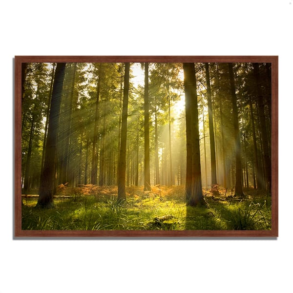 Framed Photograph Print 47 In. x 32 In. Forest at Dusk Multi Color