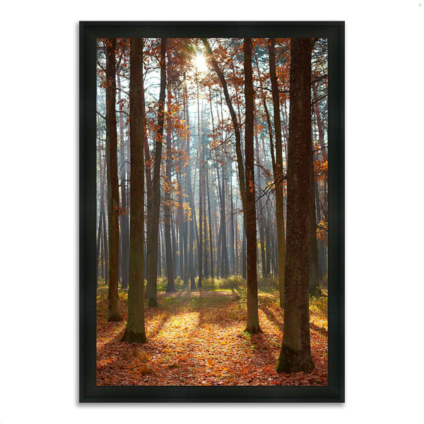 Framed Photograph Print 27 In. x 39 In. Autumn Forest Multi Color