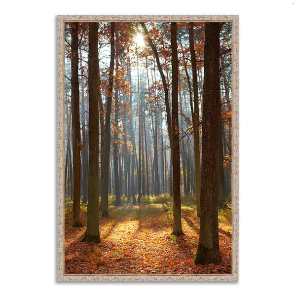 Fine Art Giclee Print on Gallery Wrap Canvas 26 In. x 38 In. Autumn Forest Multi Color