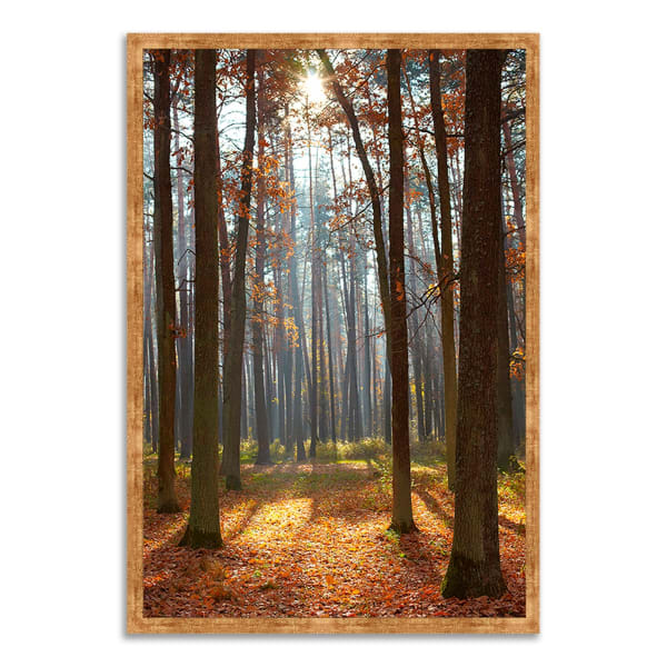 Framed Photograph Print 26 In. x 38 In. Autumn Forest Multi Color