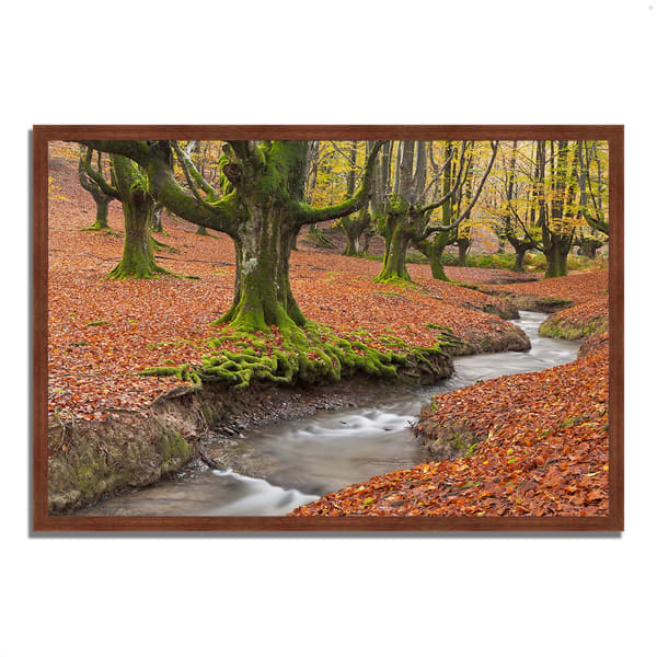 Framed Photograph Print 47 In. x 32 In. Otzarreta Beech On A Red Carpet Multi Color