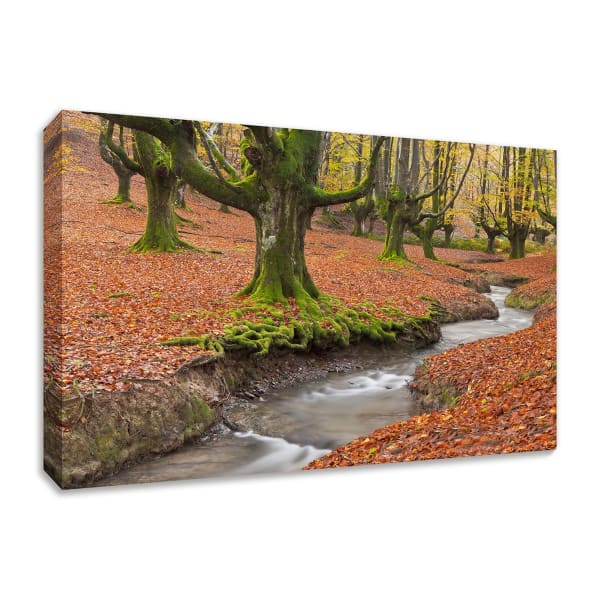 Fine Art Giclee Print on Gallery Wrap Canvas 57 In. x 38 In. Otzarreta Beech On A Red Carpet Multi Color