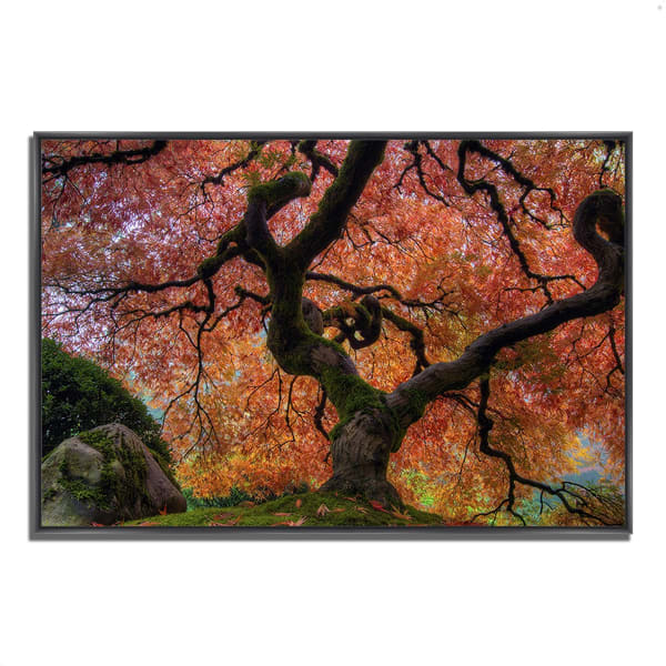 Fine Art Giclee Print on Gallery Wrap Canvas 22 In. x 32 In. Japanese Maple in Autumn Multi Color