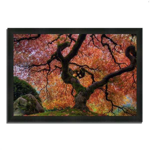Framed Photograph Print 33 In. x 46 In. Japanese Maple in Autumn Multi Color