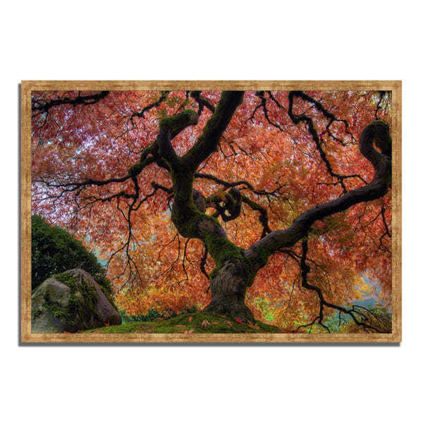 Framed Photograph Print 32 In. x 47 In. Japanese Maple in Autumn Multi Color
