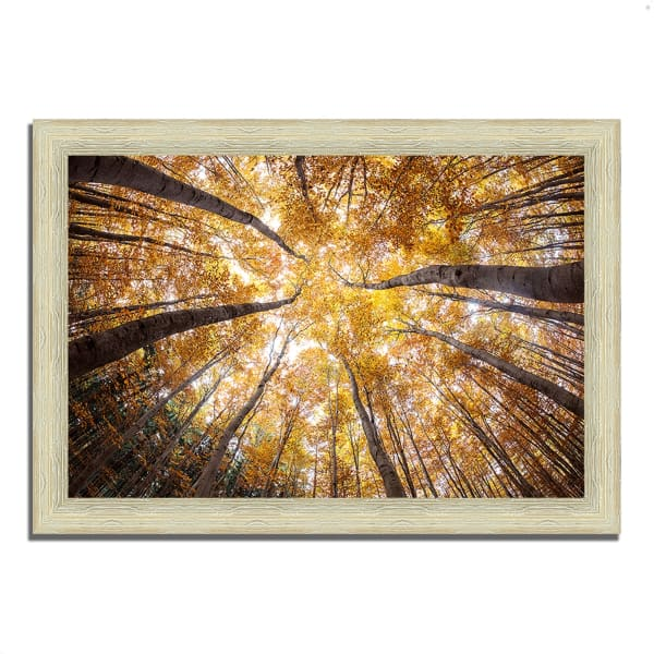 Framed Photograph Print 63 In. x 44 In. Reach For The Sky Multi Color