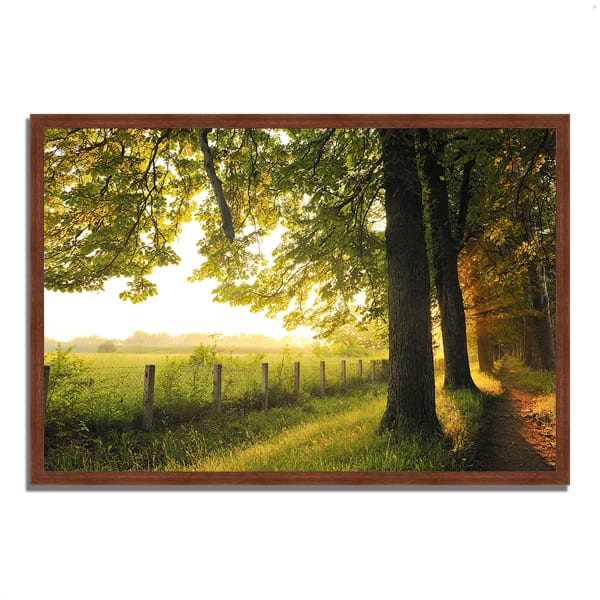 Framed Photograph Print 38 In. x 26 In. Fresh Morning Sun Multi Color